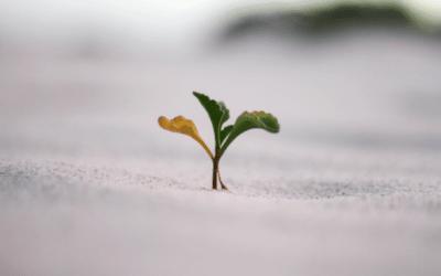 Individual Growth